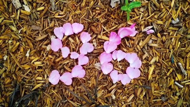 fleurs-96-1