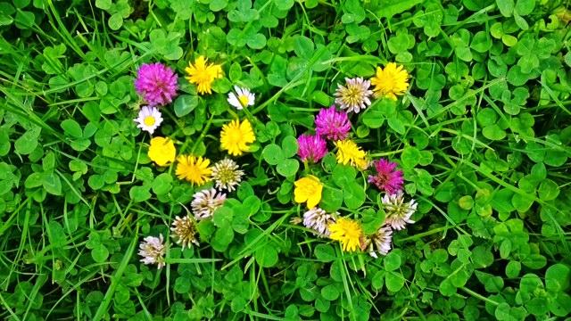 fleurs-96-2